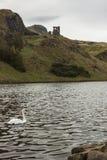 Svanen på Sts Margaret lås, Holyrood parkerar, Edinburg Royaltyfri Foto