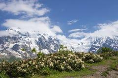 Svaneti山风景在明亮的晴朗的夏日在乔治亚 斯诺伊山峰 免版税库存照片
