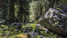 Svaneti Region Georgia. Forest and Rocks stock photo