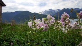 Svaneti Region Georgia. Mestia View royalty free stock photo