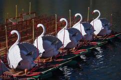 Svanfartyg i Boston den offentliga trädgården Arkivbild