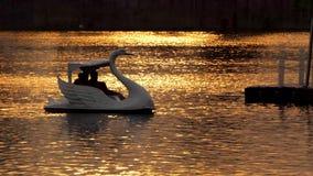 Svanfartyg på damm på solnedgången stock video