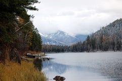Svanflod i Bigfork, Montana Arkivbilder