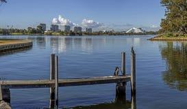 Svanflod i Perth Royaltyfri Fotografi