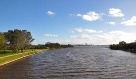 Svanflod i Perth Arkivbild