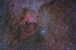 Svannebulosaregione som är närliggande stjärnan Deneb Arkivfoto
