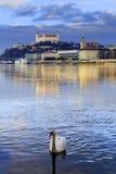 Svanparvänner på Danube River, Bratislava slott och st-mor royaltyfri foto