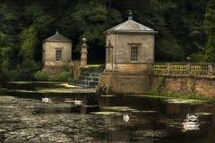 Svanreflexioner och trädgårdar Royaltyfri Bild