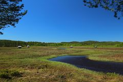 Svansele Dammaenger, een vroegere water-weide in Zweden Het is nu een natuurreservaat Royalty-vrije Stock Foto's