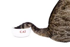 Svansen av katten i plattan Royaltyfri Fotografi