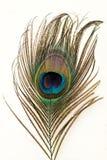 Svansfjäder av en påfågel Royaltyfri Foto