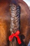 Svansgarnering med det röda bandet Flätad tråd för hästhår royaltyfri foto