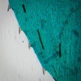 Svart algleafmicro Arkivfoto
