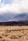 Svart Angus Cattle Mountain Ranch Living boskaplantgård Agricult Royaltyfria Bilder