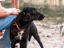 Svart anseende för hund för byracka för Ñ-ute nära man och se in i avstånd royaltyfria foton
