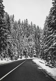 Svart asfaltväg i snöig skog på vintern arkivbilder