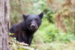 svart barn för björn Royaltyfri Fotografi