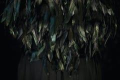Svart befjädrar att skina i turkos och gräsplan på svart fotografering för bildbyråer