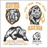 Svart björn för logo, emblem för sportlag, designbeståndsdelar och etiketter Arkivbild