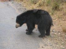 Svart björn på vägen Royaltyfria Foton