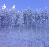 svart blått footwayfotolandskap tonade vita vinterträn Arkivbilder