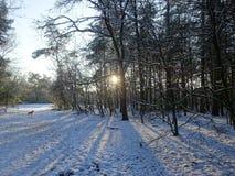 svart blått footwayfotolandskap tonade vita vinterträn Royaltyfri Foto
