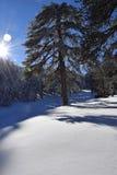svart blått footwayfotolandskap tonade vita vinterträn fotografering för bildbyråer