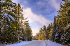 svart blått footwayfotolandskap tonade vita vinterträn Royaltyfria Foton