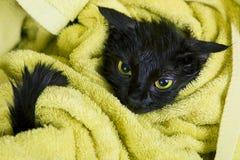 Svart blöt katt efter bad Royaltyfri Fotografi