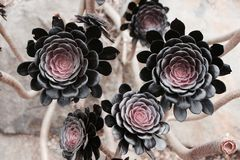 svart blommas Royaltyfri Fotografi