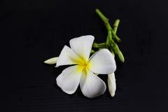 svart blommawhite Royaltyfri Foto