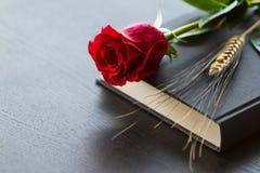 Svart bok med den röda rosen Fotografering för Bildbyråer