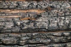 Svart br?nd till kol tr?yttersida Naturlig bakgrund och textur av det br?nda barrtr?det royaltyfri fotografi