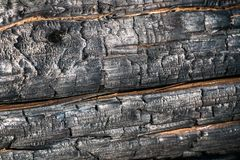 Svart br?nd till kol tr?yttersida Naturlig bakgrund och textur av det br?nda barrtr?det arkivfoto