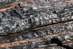 Svart br?nd till kol tr?yttersida Naturlig bakgrund och textur av det br?nda barrtr?det royaltyfri foto