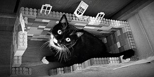 SVART CAT Lego bw arkivbilder