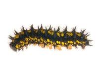 svart caterpillar isolerad vit yellow Arkivfoto
