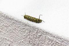 svart caterpillaryellow Arkivbilder