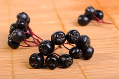 svart chokeberry Fotografering för Bildbyråer