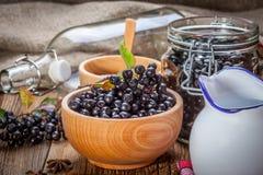 svart chokeberry Royaltyfri Bild