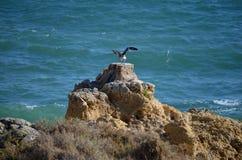 Svart-dragen tillbaka fiskmåsuttorkning i vinden royaltyfri foto