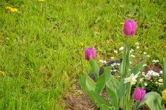Svart fågel i blommaträdgård royaltyfri foto