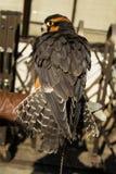 Svart fågelsida Fotografering för Bildbyråer