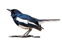 Svart fågelvektor Arkivbilder
