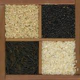svart för kornrice för brown fyra white Royaltyfri Fotografi