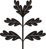 svart filialoak Royaltyfri Bild