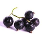 svart filialvinbär arkivbilder