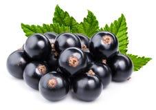 svart filialvinbär Royaltyfria Bilder