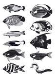 svart fiskvektorwhite Arkivfoton