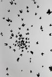 svart fjäril Arkivfoton